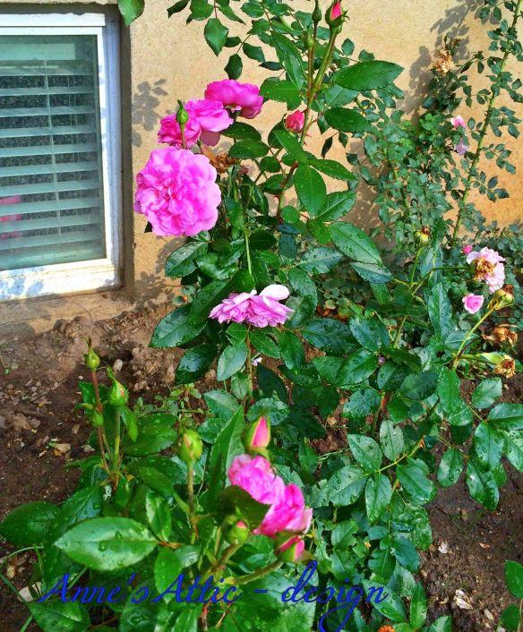 Roses in Your Home Annes Attic design